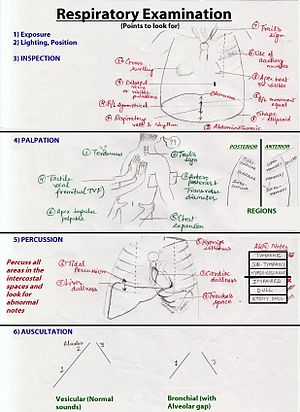 Respiratory examination - Respiratory examination