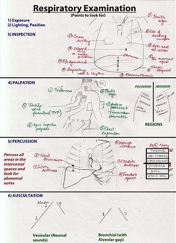 Respiratory Examination - Wikipedia