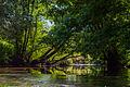 Rivière de la Zorn depuis sentier Weckmann.jpg