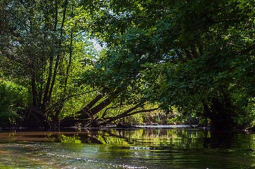 Rivière de la Zorn depuis sentier Weckmann