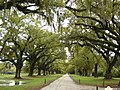 Road on the Boone Hall Plantation Mt Pleasant SC - panoramio.jpg