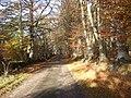 Road through Cairnie Woods - geograph.org.uk - 606985.jpg