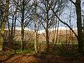 Roadside trees nr Muircot - geograph.org.uk - 85415.jpg
