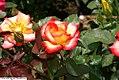 Rosa Betty Boop 1zz.jpg