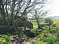Ruined Cottage near Harding Down - geograph.org.uk - 82850.jpg