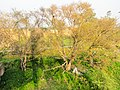 Rupnagar, Punjab, India - panoramio (75).jpg