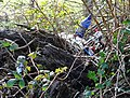 Rural rubbish - geograph.org.uk - 327324.jpg