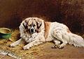 SA 1065-Figaro-Liggende sint-bernardshond.jpg