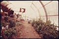SOLAR GREENHOUSE OWNED AND BUILT BY PETER HOWELL, LOCATED AT ABOUT THE 8,500 FOOT LEVEL IN THE FRONT RANGE - NARA - 557321.tif