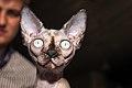 SPH-котята (15677123632).jpg