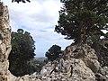 Sabine Beckmann Rocky landscape in Kritsa Cypress forest 10 10.jpg