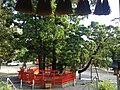 "Sacred tree ""Ayasugi"" in Kashii Shrine 20160609.jpg"