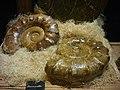 Saint-Jacut-les-Pins - Tropical Parc, musée des minéraux (09).jpg
