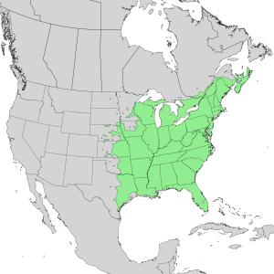 Sambucus canadensis - Image: Sambucus nigra canadensis range map 1