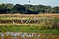 Sandhill cranes at Stone Lakes NWR (5347298450).jpg