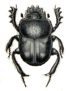 Skarabäus Symbol