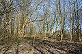 Schleswig-Holstein, Kellinghusen, Naturerlebnisraum Rensinger See NIK 1784.JPG