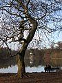 Schlosspark Nymphenburg Monopteros Muenchen-2.jpg