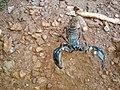 Scorpion (15).jpg