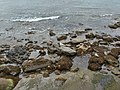 Seahouses Foreshore - geograph.org.uk - 1104484.jpg