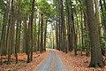 Seeger Road (1) (10567399115).jpg