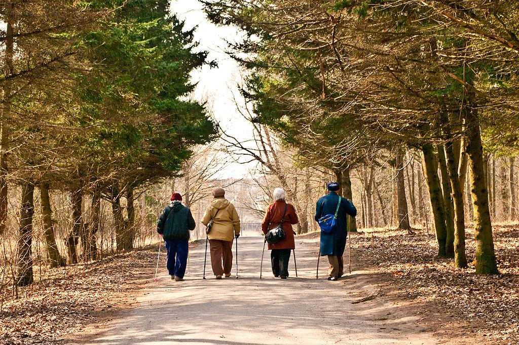 Four seniors walk down a path as part of arts programming for seniors.