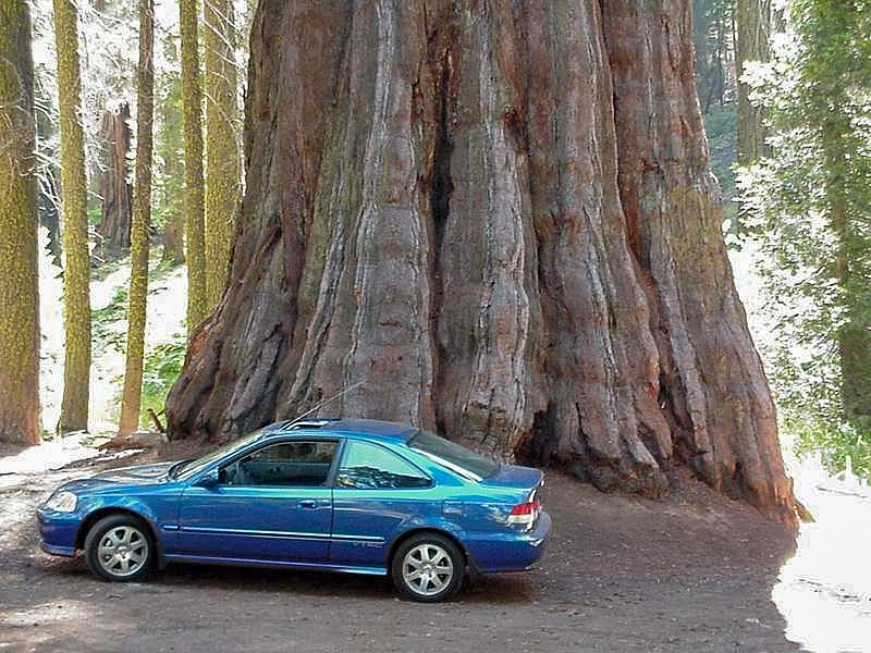 Sequoia and a car