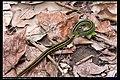 Serpentes (6084942255).jpg
