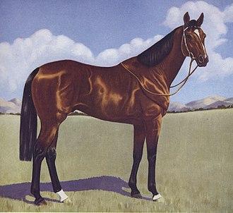Shannon (horse) - Image: Shannon (AUS)