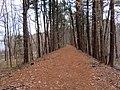 Shenipsit Trail (2), December 2018.JPG