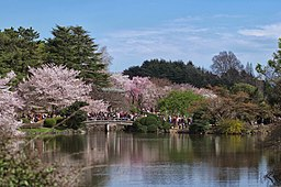 Shinjuku Gyoen(Shinjuku Imperial Garden) - 新宿御苑 - panoramio (18)
