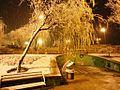 Shiraz - panoramio (13).jpg
