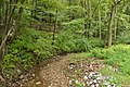Sideling Hill Creek tributary in SGL 49.jpg