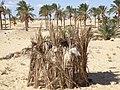 Sinai palm dates store.jpg