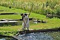Sirnitz Neualbeck 10 Fischereibetrieb Payr Ernte mit Kescher 16072013 392.jpg