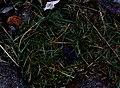 Skåne 2014-10-04 (15581620062).jpg