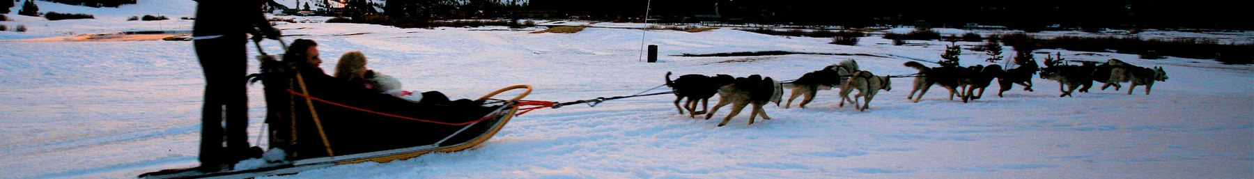 Sled dogs sunset banner.jpg