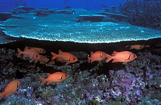 Pacific Remote Islands Marine National Monument - Soldierfish, Baker Island NWR