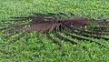 Sole d´ acciaio by Ilija Šoškić -6872.jpg