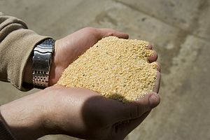 Soybean meal - Soybean meal