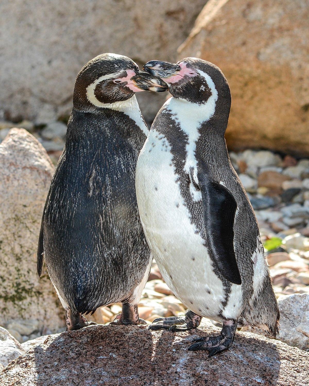 Pinguin Videos