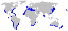Range of the smooth hammerhead
