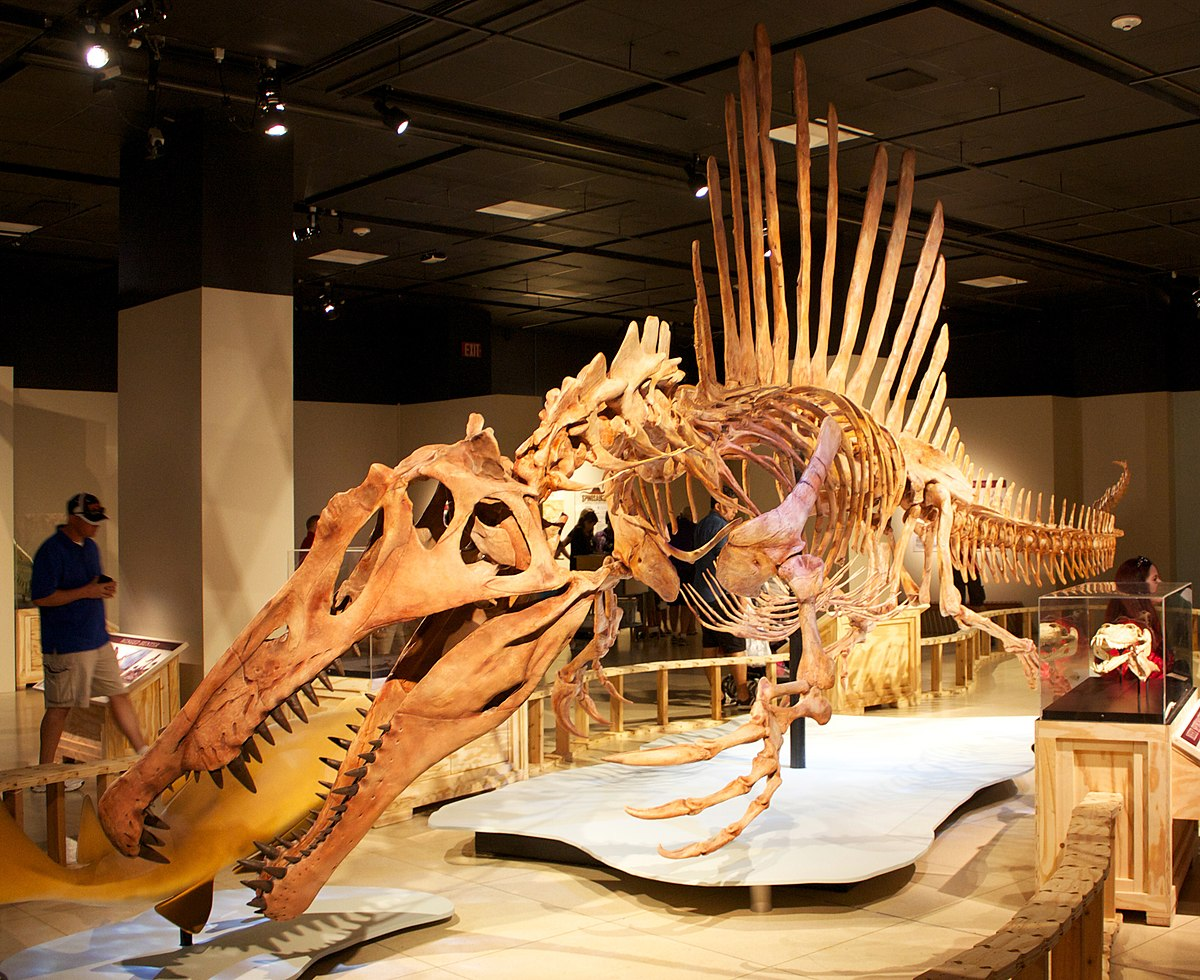 Spinosaurus wikipedia for Best of the best wiki
