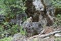 Squirrel (10332733595).jpg