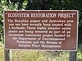 Starr-031108-2014-Schinus terebinthifolius-restoration sign-Gasparilla-Florida (24557078032).jpg