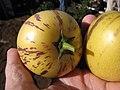 Starr-091023-8515-Solanum muricatum-fruit in hand-Kula Experiment Station-Maui (24356173454).jpg