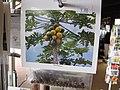 Starr-110307-2569-Carica papaya-seeds in packets-Kula Botanical Garden-Maui (25051976116).jpg