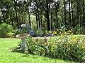 Starr-170513-8630-Agapanthus praecox subsp orientalis-flowering habit with cosmos and bird bath-Hawea Pl Olinda-Maui (35062487932).jpg
