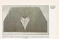 Stuttgarter Mitteilungen über Kunst und Gewerbe, 1904-1905, Seite 121.jpg
