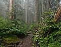 Summit Lake Trail 1177, WA (DSC 0640).jpg